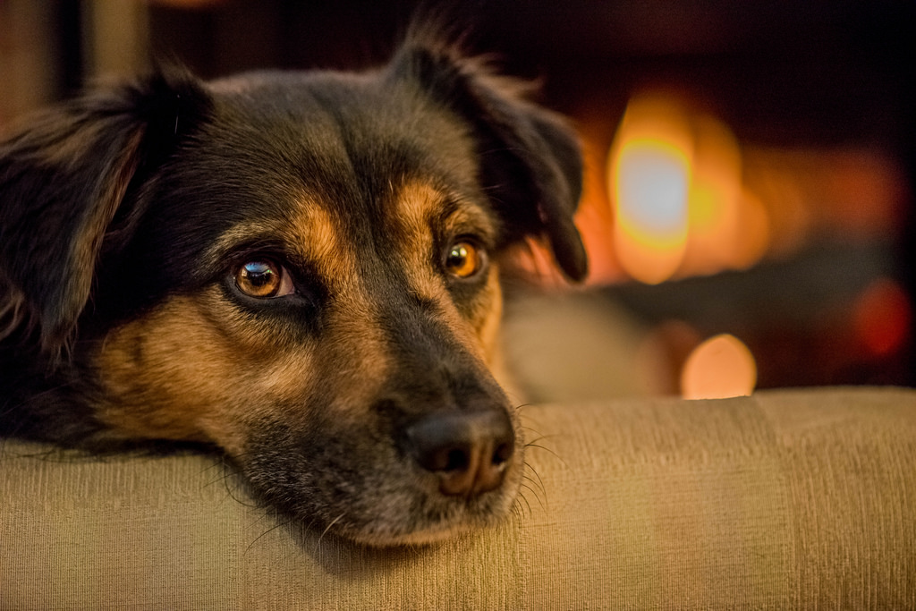 Sąd: 5 tys. zł zadośćuczynienia za śmierć ukochanego psa